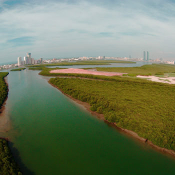 View over the mangrove forest of Ras Al Khaymah, UAE // Rob Barnes // UAE