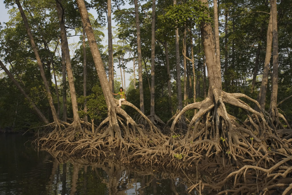 Why Mangroves?