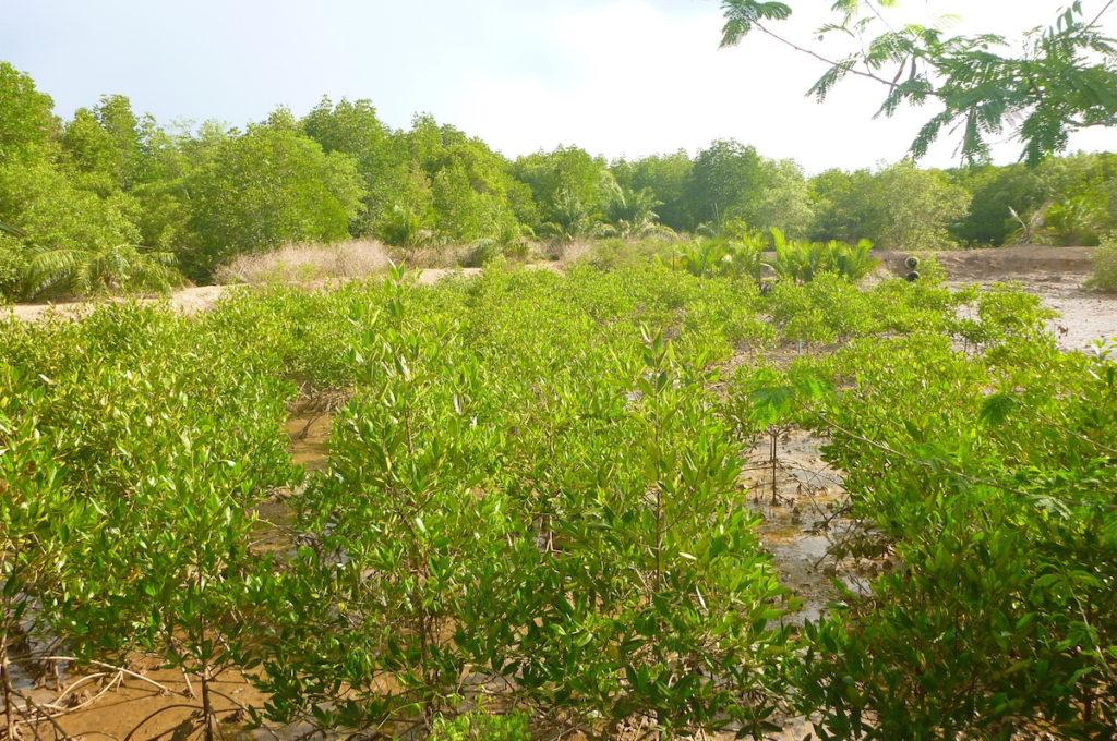 Community-Based Ecological Mangrove Restoration