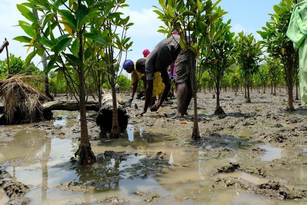 Mangrove-education