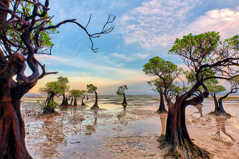 Harry-Pieters-Indonesia-The-Dancing-Mangroves1